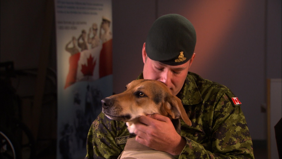 service dogs for vets